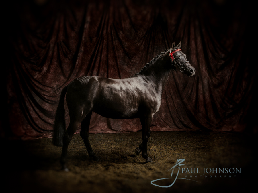 Horse-portrait-photography-0001