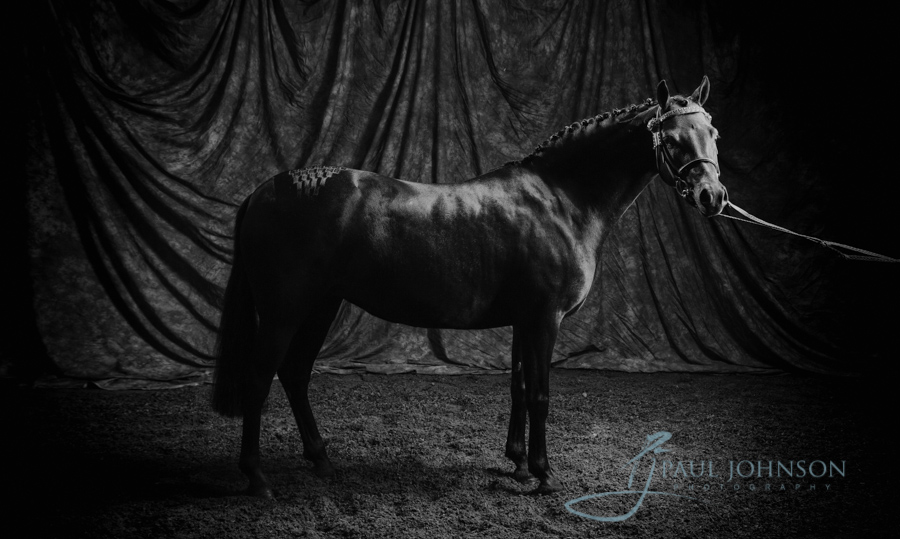 Horse-portrait-photography-00012