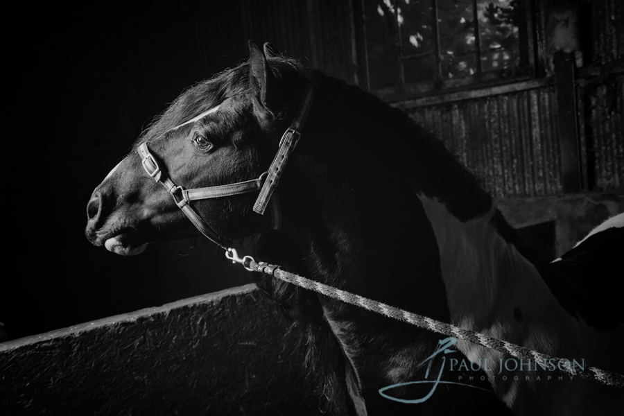 Horse-portrait-photography-0108