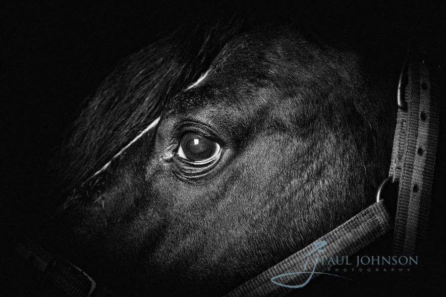Horse-portrait-photography-0117