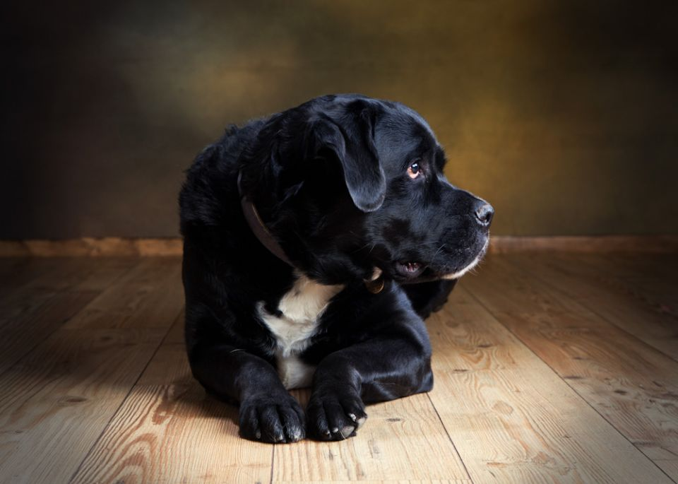 Pet Photographer Kent Paul Johnson Portrait Photography